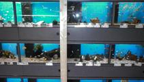 aquarium3 tc strijker